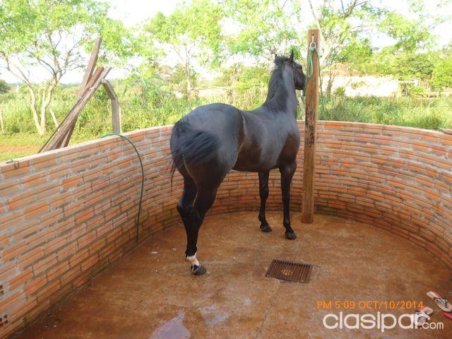 caballo, caballos, potros, potrillo, potrillos, yeguas #75670 ...