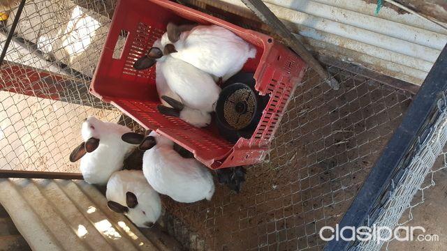 Vendo conejos 790947 en paraguay for Vendo muebles jardin